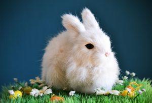 Conejo similar a un jerbo